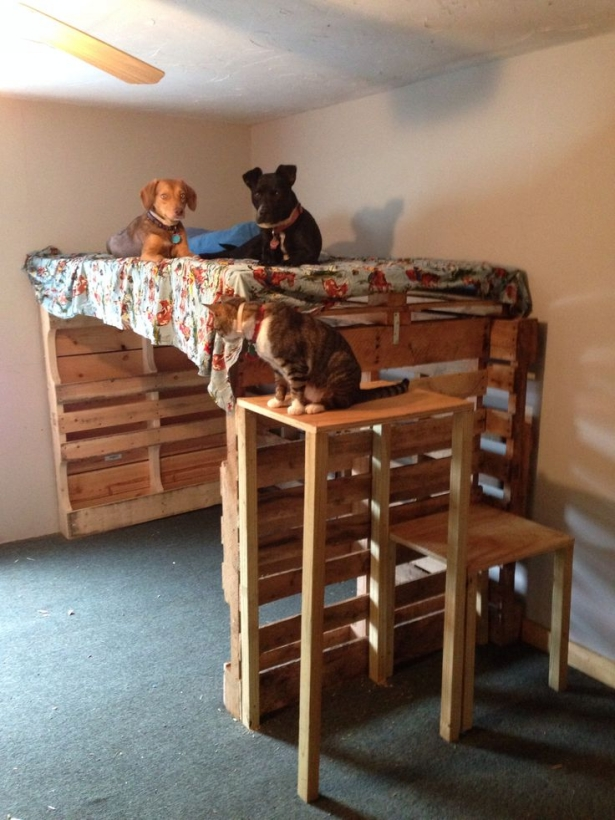 Astonishing ideas for pallet loft bunk beds wood for Pet bunk bed gallery